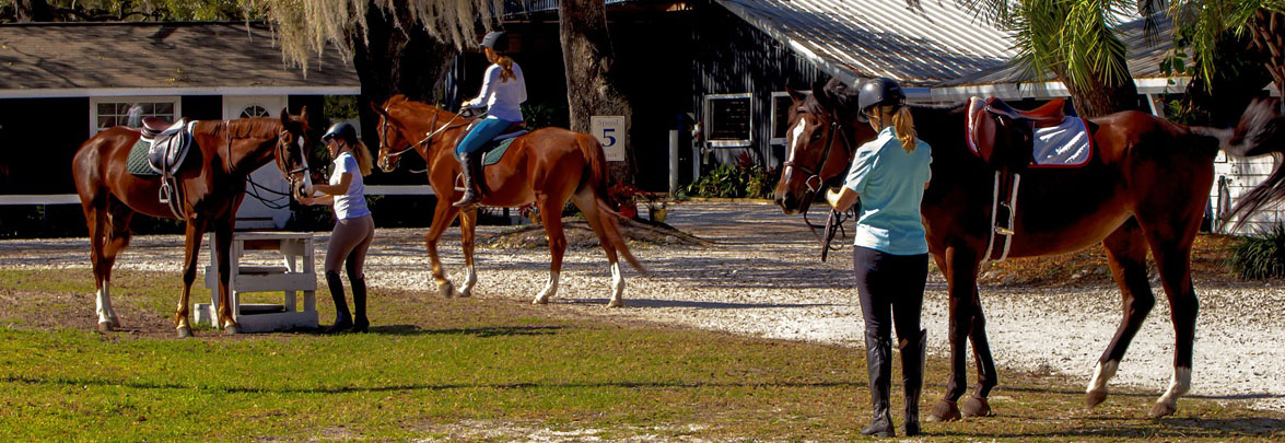 equestrian-banner